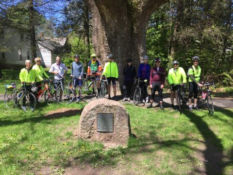 AMC cyclists in front of Sunderland's Buttonball tree